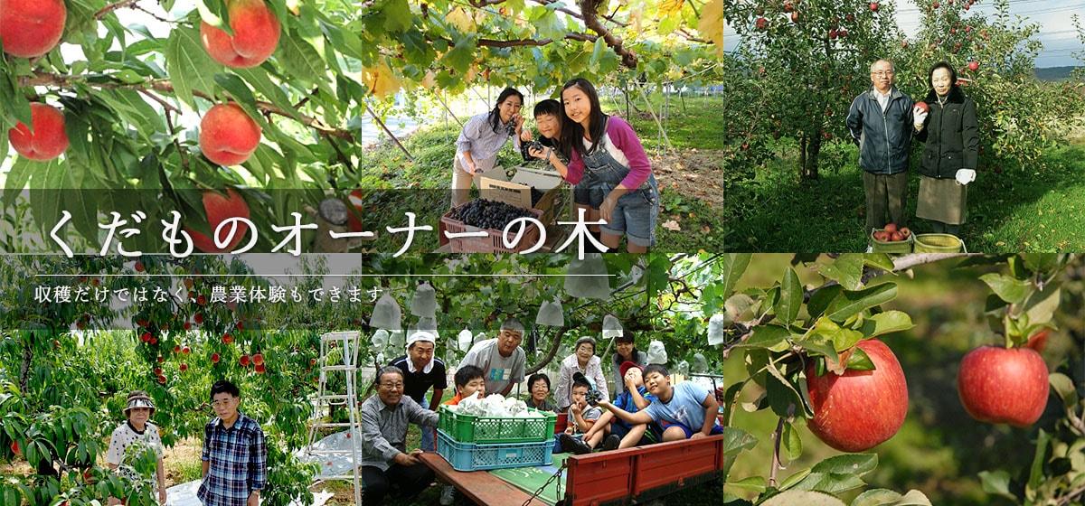くだものオーナーの木 収穫だけではなく、農業体験もできます